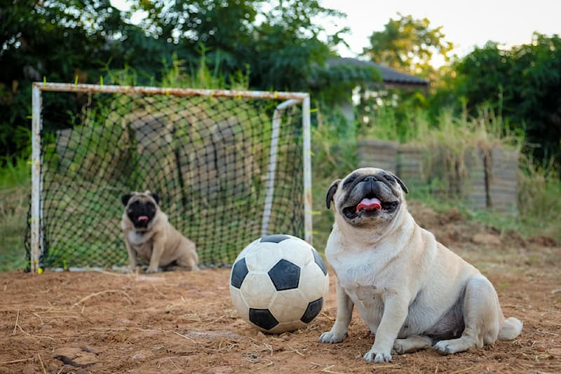 Sport Story: #3 This puppy is too playful
