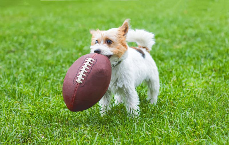 Sport Story: #4 This dog is good with the ball