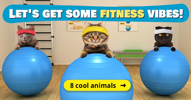 Sport Story: 8 energetic animals exercising like a PRO!