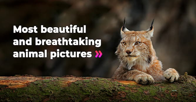 Nature Story: Underrated wildlife pictures that should be seen by everyone on the planet