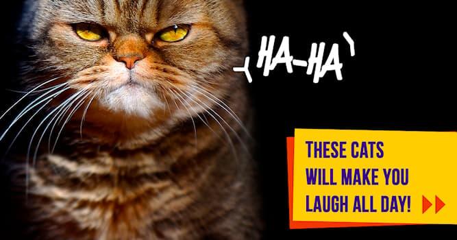 animals Story: 10 weirdest cats on the internet