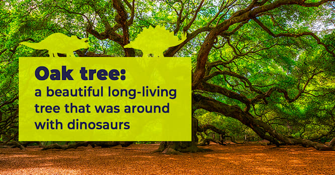 Nature Story: 5 amazing facts about oak trees