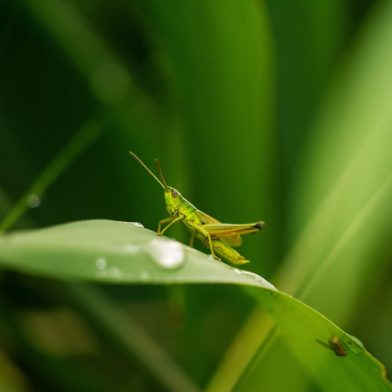 Science Story: #5 Grasshoppers' legs function as their ears