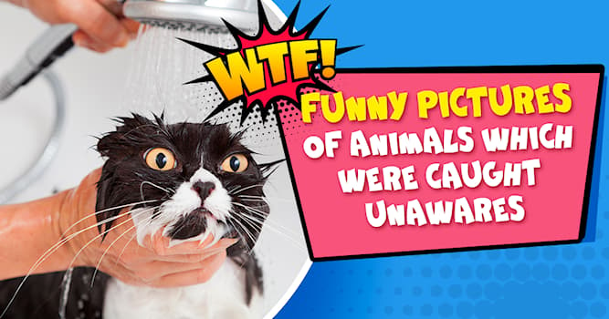 animals Story: 7 hilarious pictures of animals going crazy