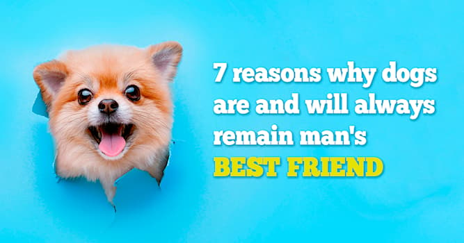 animals Story: 7 most hilarious dogs you will ever see