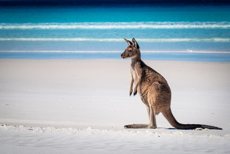 Nature Story: #3 The kangaroo hop is considered the most efficient way to get around.