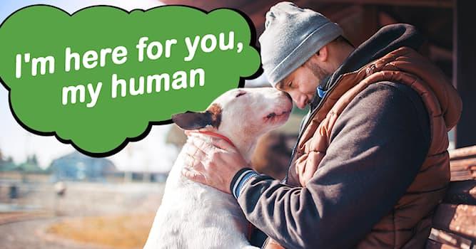 animals Story: 6 Photos of compassionate animals