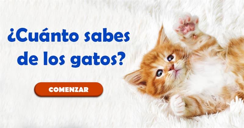 Naturaleza Quiz Test: ¿Cuánto sabes de los gatos?