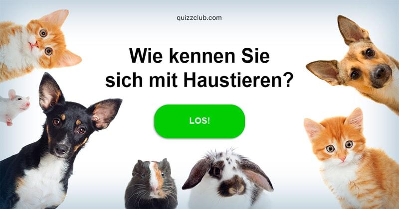 Gesellschaft Quiz-Test: Haustier-Quiz