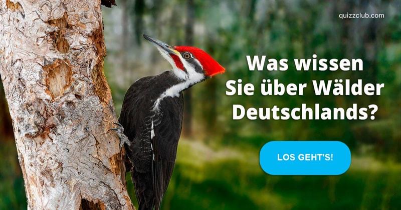 Gesellschaft Quiz-Test: Wald-Quiz