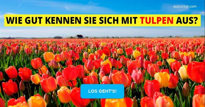 Geographie Quiz-Test: Das Frühjahr blüht: Wie gut kennen Sie sich mit Tulpen aus?