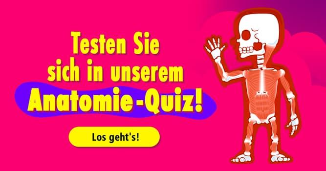 Gesundheit Quiz-Test: Anatomie-Quiz