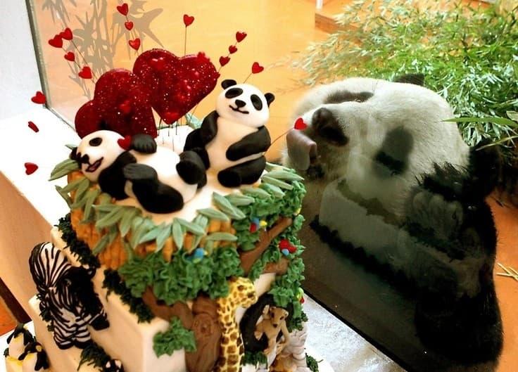 natura Pytanie-Ciekawostka: Jakie zwierzęta nie rozróżniają słodkiego smaku?