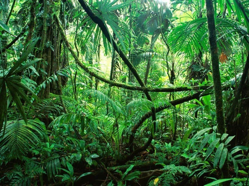 Geography Trivia Question: What continent is the Amazon Rainforest located on?