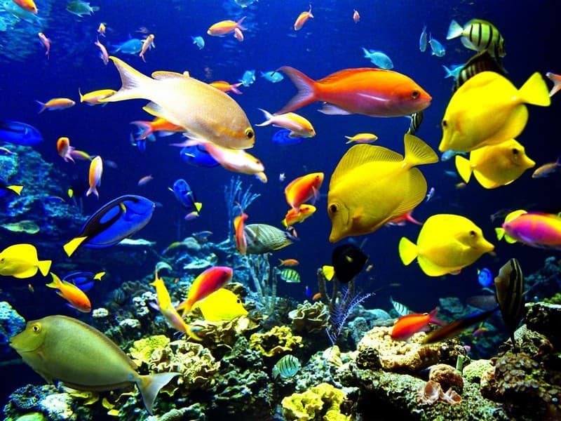 Nature Trivia Question: What is the fastest animal in the water?