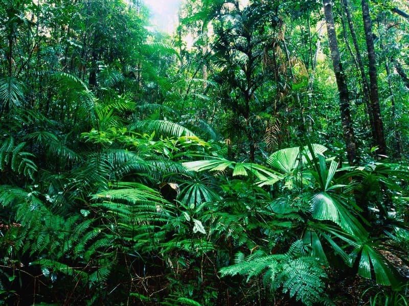 Geographie Wissensfrage: Was ist der größte Regenwald der Welt?
