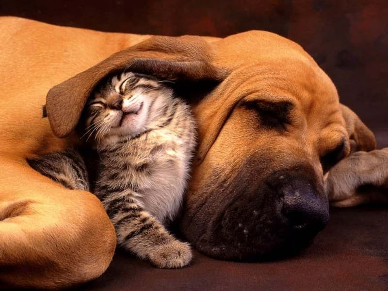 Geography Trivia Question: Which animals have best friends?