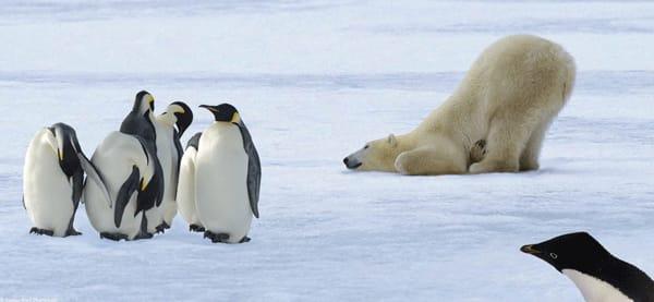 Природа Вопрос: Какое из перечисленных животных не живёт в Арктике?