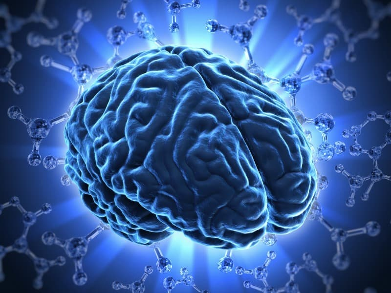 Science Trivia Question: Where is vision processed in the human brain?