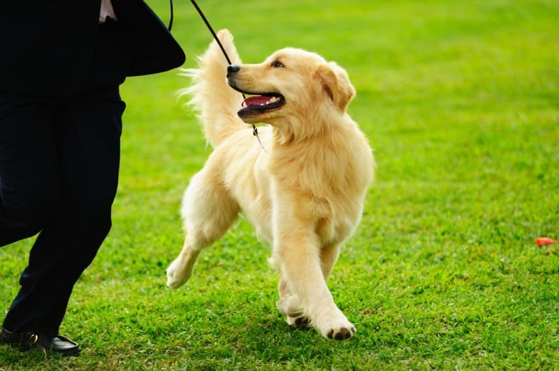 Society Trivia Question: How many guide dogs help people in the U.S. and Canada?