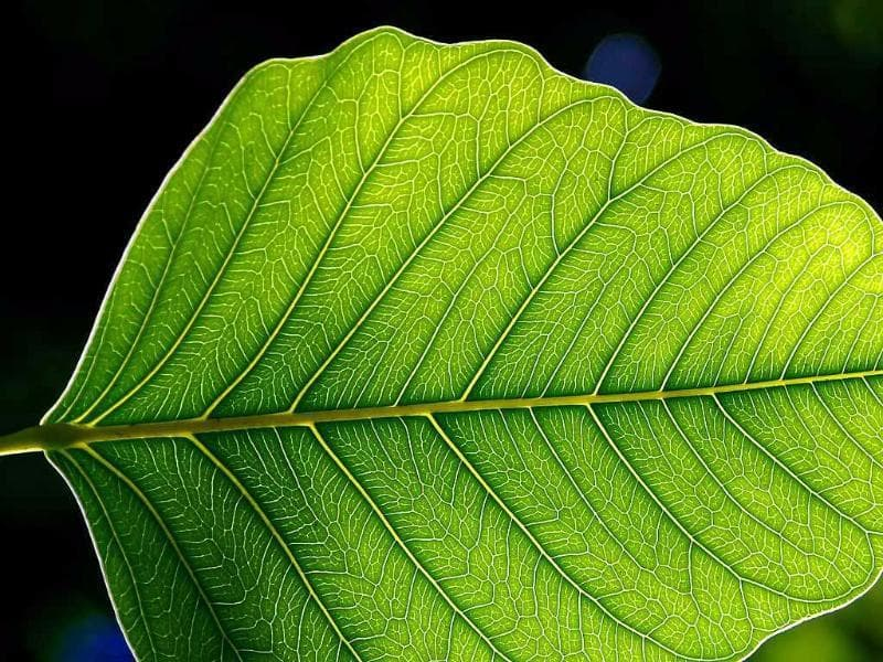 Nature Trivia Question: What is the name of the process in which plants convert sunlight into oxygen?