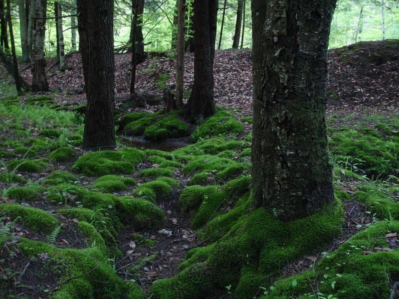 Natur Wissensfrage: Was ist ein Moorboden?