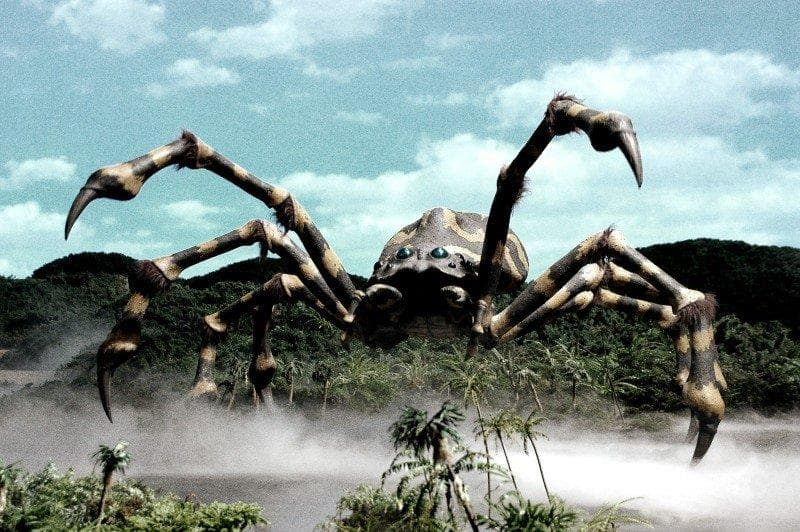 природа Запитання-цікавинка: Який павук вважається найбільшим в світі за версією Книги рекордів Гіннесса?