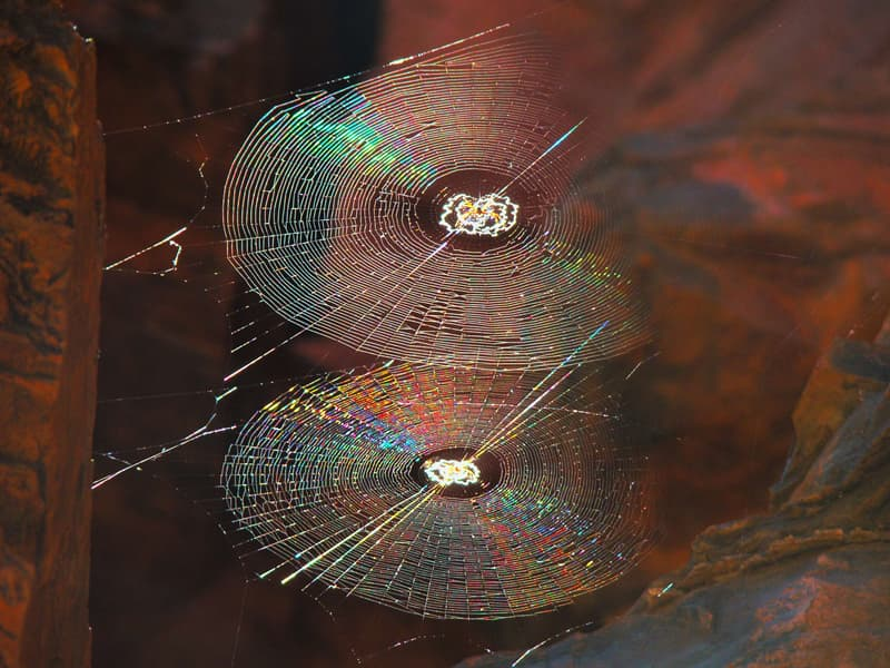 Nature Trivia Question: What is a spider's web made of?