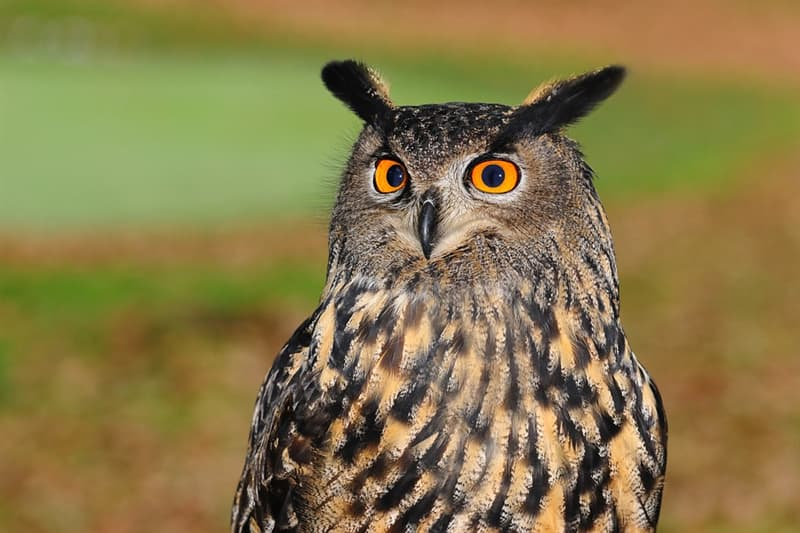 Nature Trivia Question: Can owls move their eyes?