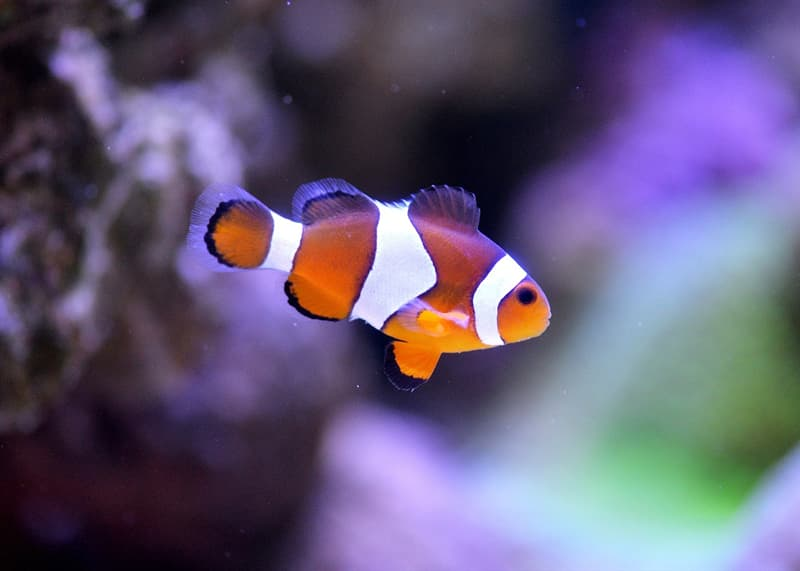 Science Trivia Question: What are chemical substances poisonous to fish called?