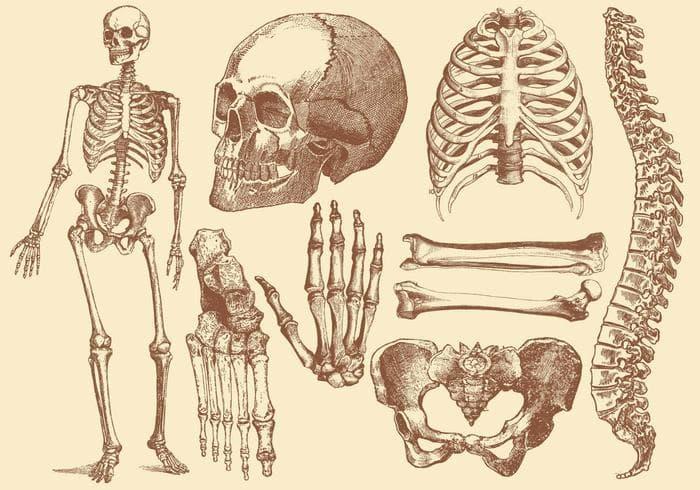 Wissenschaft Wissensfrage: Was enthalten die größeren Knochen?