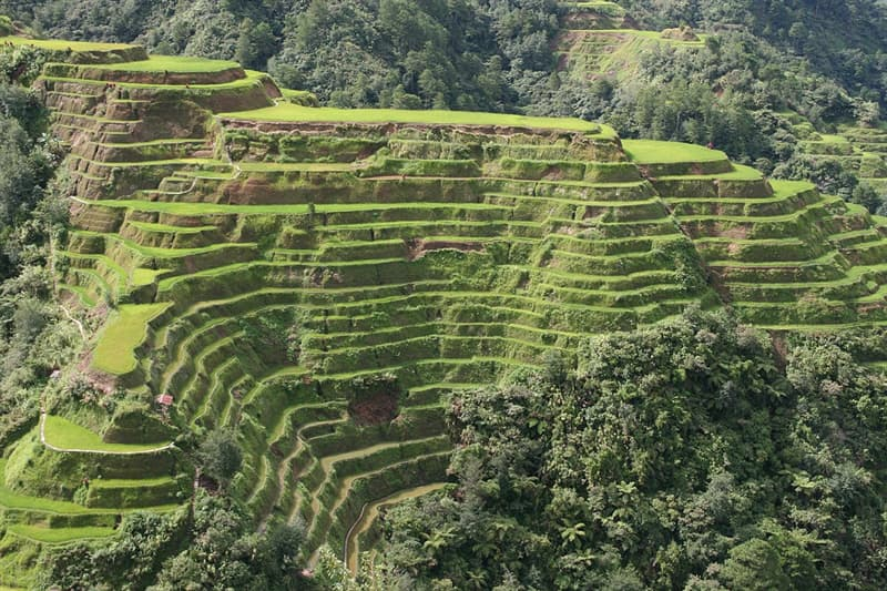 Kultura Pytanie-Ciekawostka: Jak nazywają się liczące ok. 2000 lat tarasy rolne w zboczach górskich Ifugao na Filipinach?