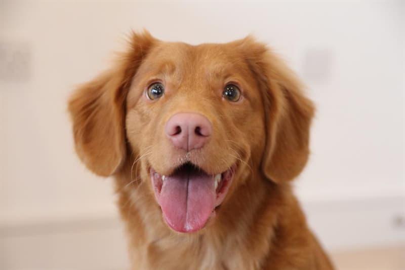 природа Запитання-цікавинка: Яка частина тіла у собаки є дуже потужним сенсорним органом?