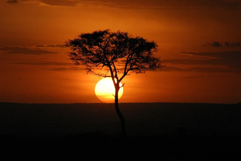 Culture Trivia Question: Besides English, what is Kenya's other official language?