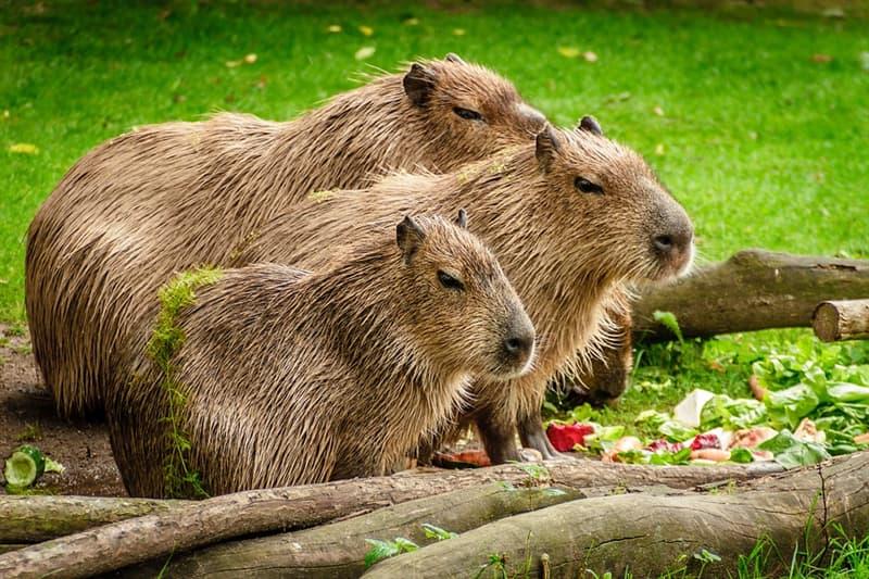 природа Запитання-цікавинка: Що за тварина зображена на фотографії?