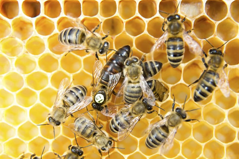 Nature Trivia Question: Do bees have noses?