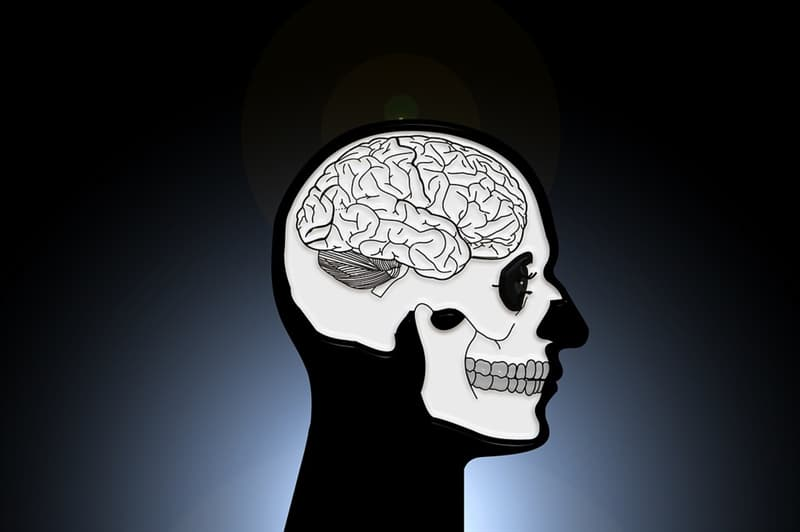 Science Trivia Question: How many bones are there in the human skull?
