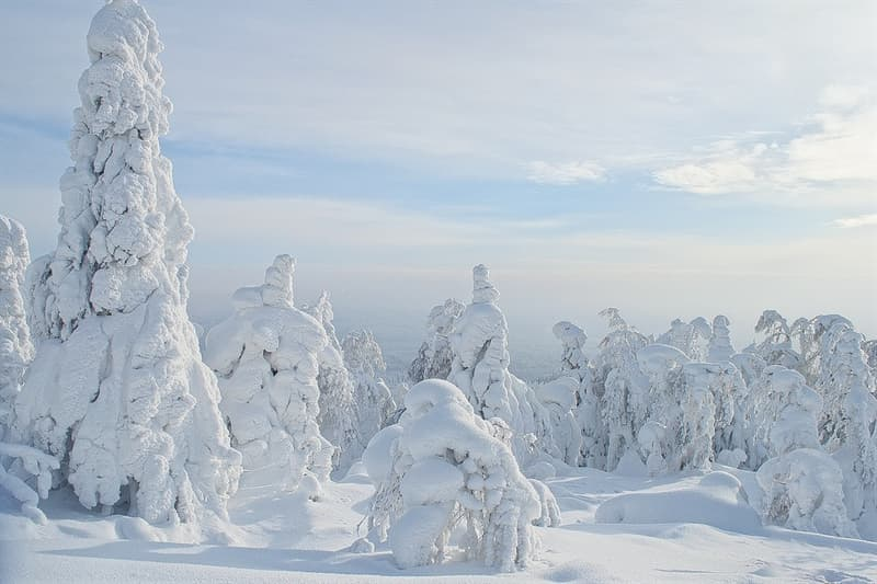 Nature Trivia Question: In some parts of Russia it gets so cold that trees explode.