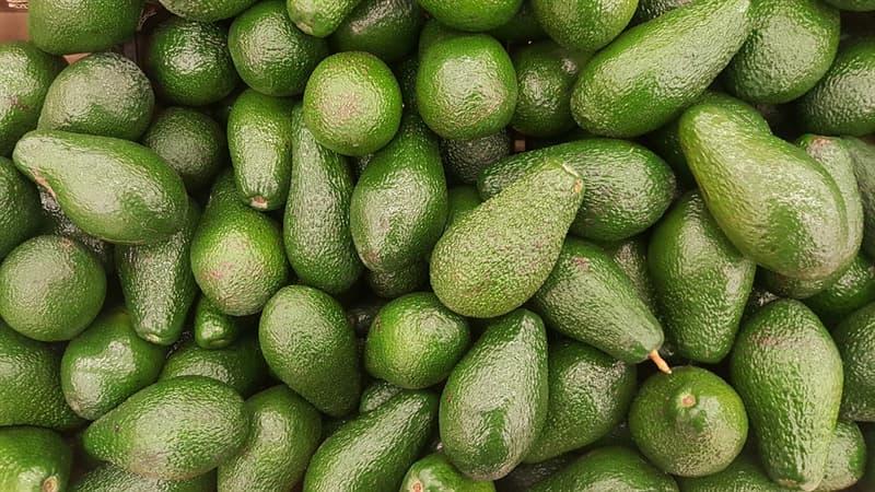 natura Pytanie-Ciekawostka: Czy awokado jest uważane za owoc lub warzywo?