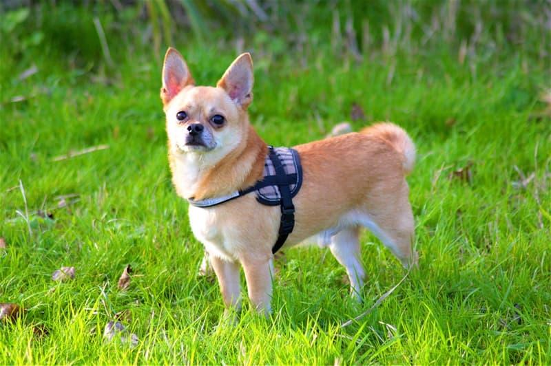 nauka Pytanie-Ciekawostka: Jak miał na imię pierwszy w historii pies wysłany na orbitę?