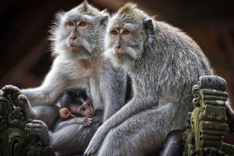 Природа Вопрос: Какое животное — самый большой примат на Земле?