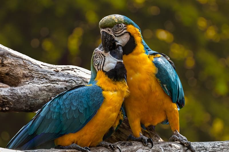 """Суспільство Запитання-цікавинка: Кому належить знаменита фраза """"Коли орли мовчать, базікають папуги""""?"""