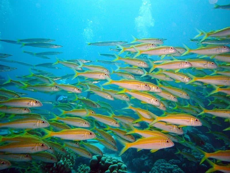 природа Запитання-цікавинка: Хто з перелічених морських мешканців не ссавець?