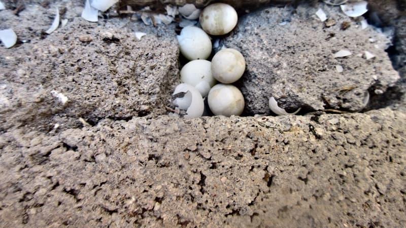 природа Запитання-цікавинка: Чи можуть ссавці відкладати яйця?