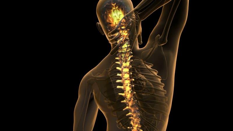 Наука Запитання-цікавинка: Скільки грудних хребців у дорослої людини?