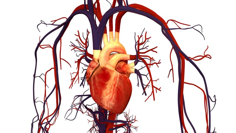 Science Trivia Question: All arteries carry oxygenated blood from the heart to the body's tissues and organs, and all veins return oxygen-depleted blood back to the heart.