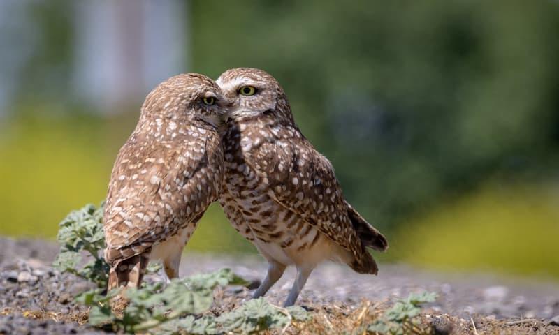 Природа Вопрос: Умеют ли совы вращать глазами?