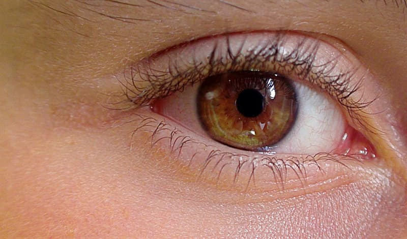 Science Trivia Question: What colored part of the human eye controls how much light passes through the pupil?