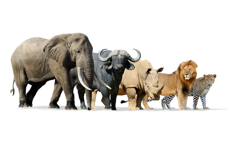 Natur Wissensfrage: Was ist das größte lebende Säugetier der Erde?