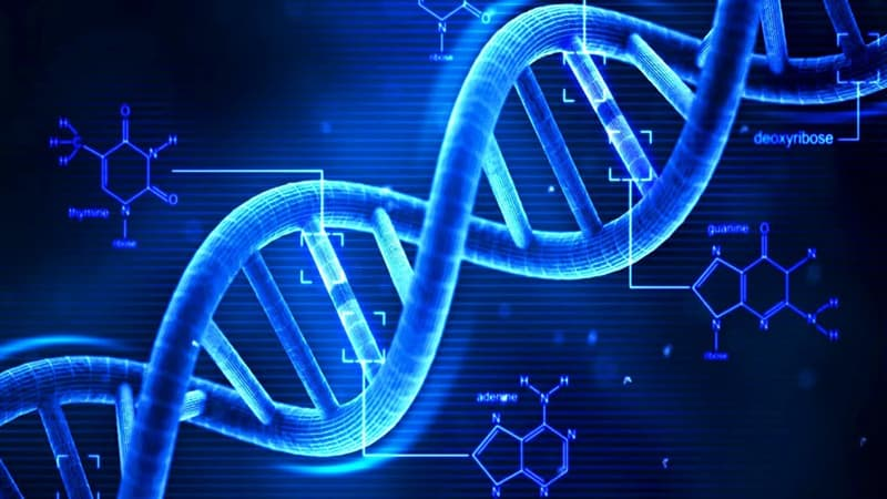 Science Trivia Question: Which of the following is not a DNA base?